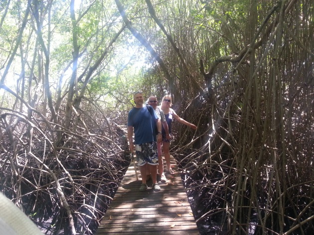 Walking through the mangroves